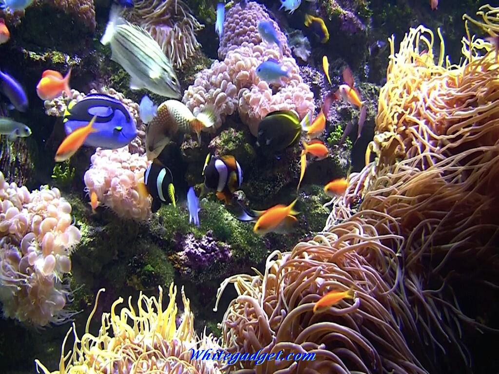 3d tropical fish desktop wallpapers wallpapersafari for 3d fish tank