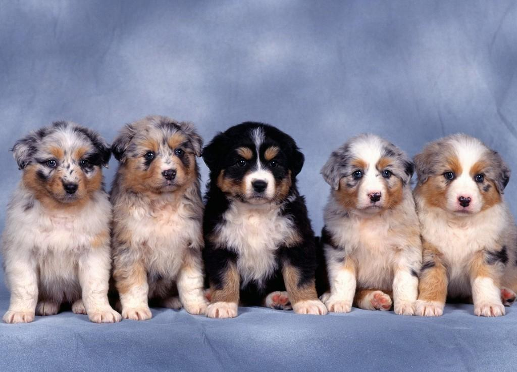 HD Animals cute dogs and puppies wallpaper 1024x736