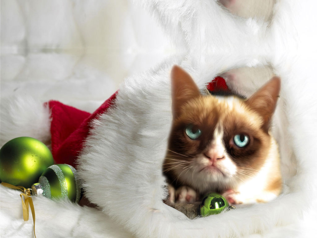 Grumpy Christmas Cat Wallpaper Download 1024x768