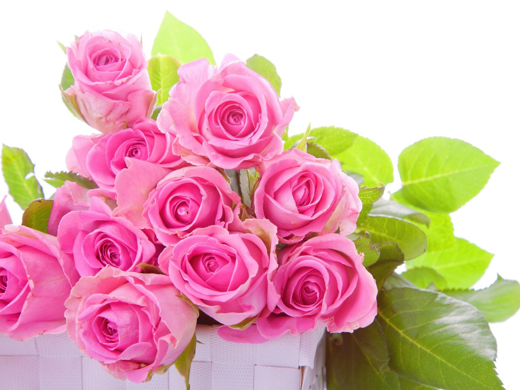 Flowers One HD Wallpaper Pictures Backgrounds FREE Download 1024x768