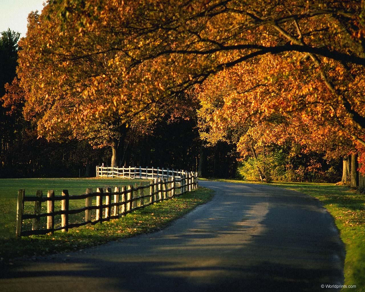 HD Wallpaper Background and Desktop Autumn Wallpaper   HD 1280x1024