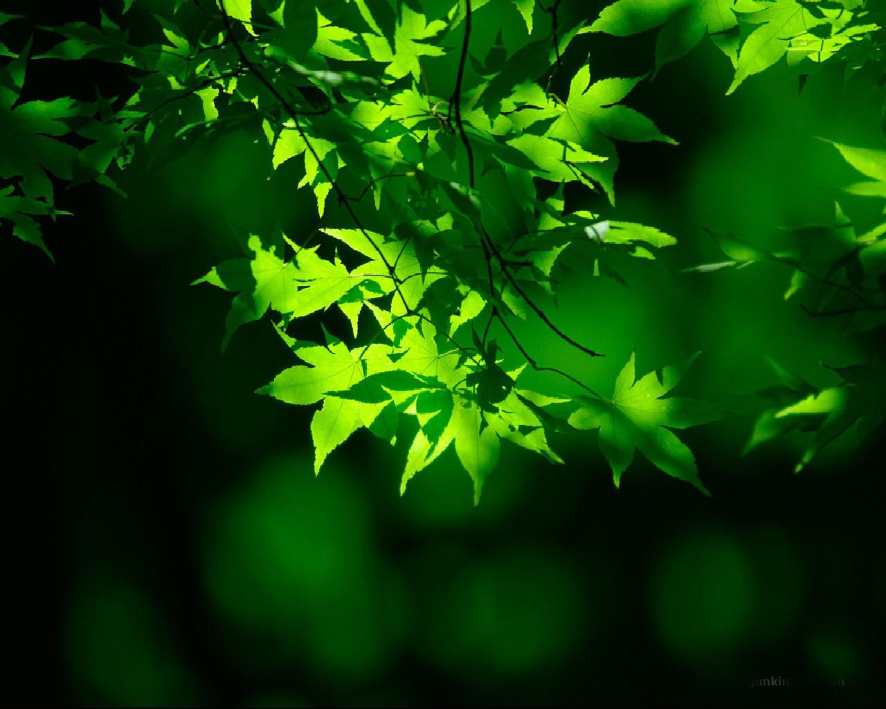 Natural Green Wallpaper Top HD Wallpapers 1280x1024