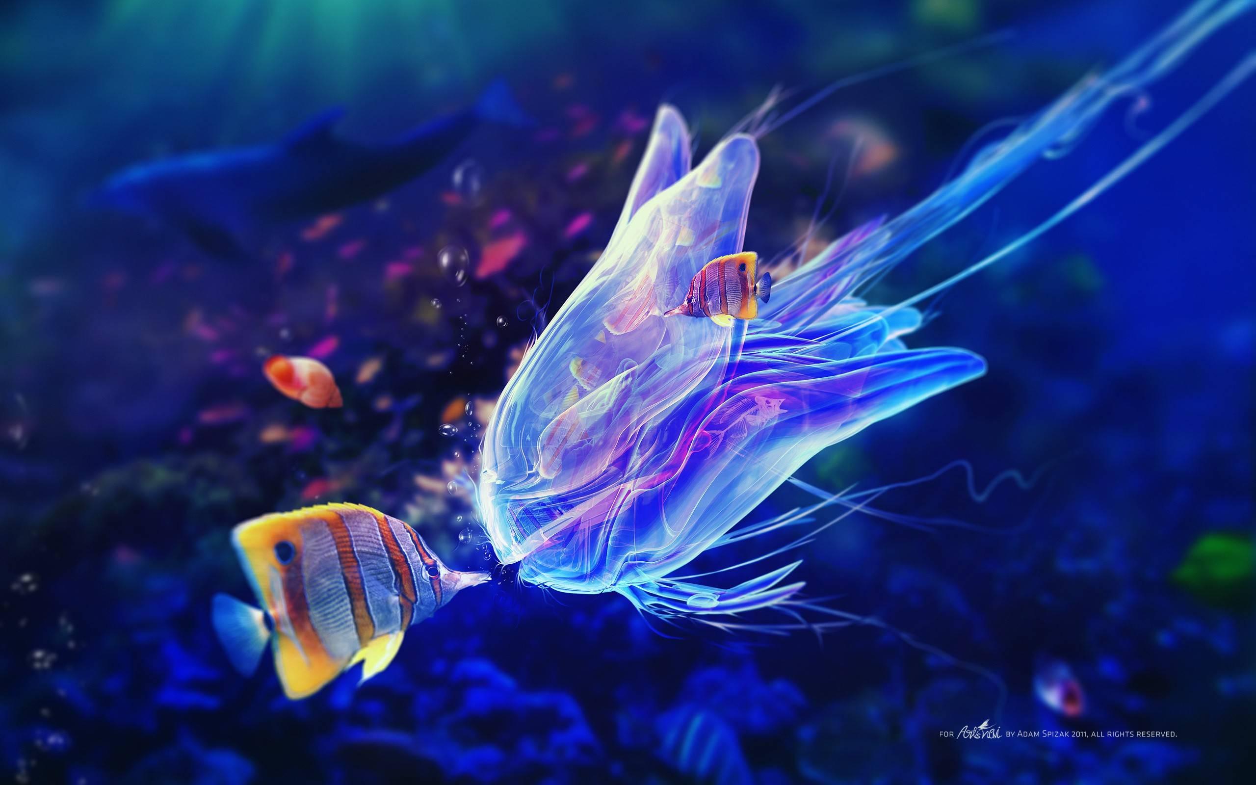 Very Beautiful Fish   Wallpaper   Fish Wallpaper 2560x1600