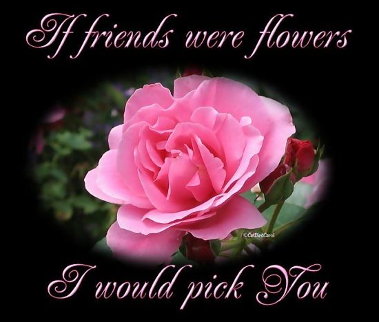 Wallpapers Friendship Day Flower Wallpapers Flowers for My Friend 550x468