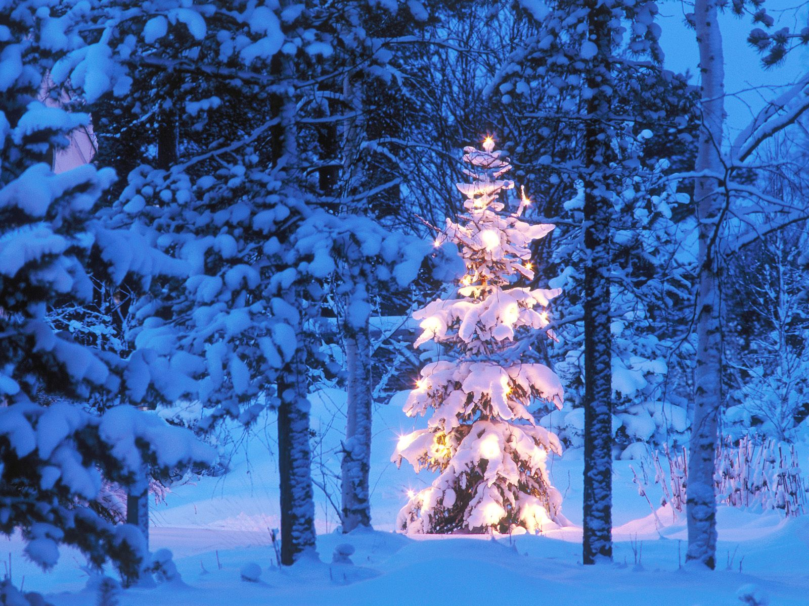 Download Christmas Tree In Snow Wallpaper 1600x1200 48