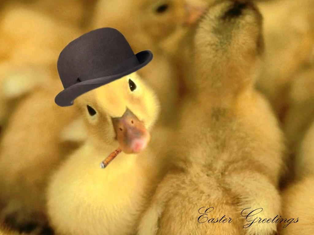 Ducky saludos fondos de pantalla Ducky saludos fotos gratis 1024x768