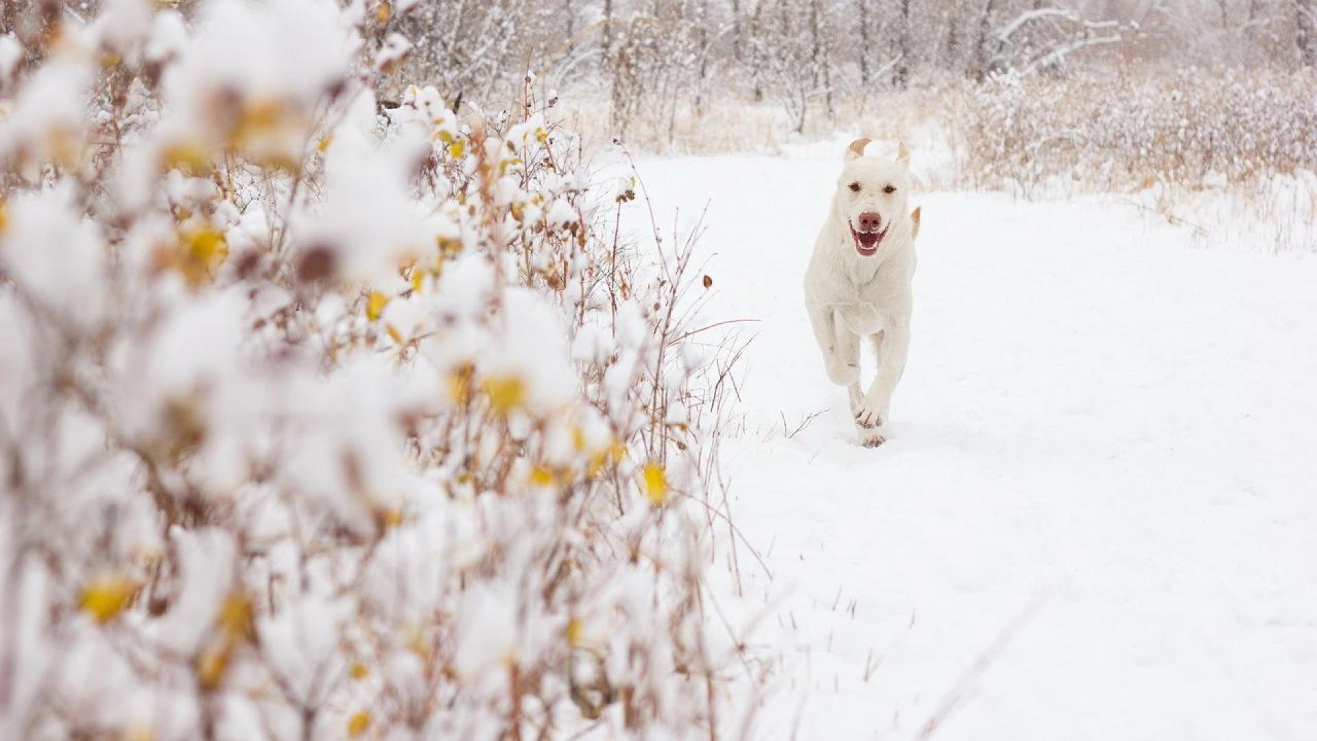 winter dog wallpaper - (#82340) - HQ Desktop Wallpapers - [HD4desktop ...