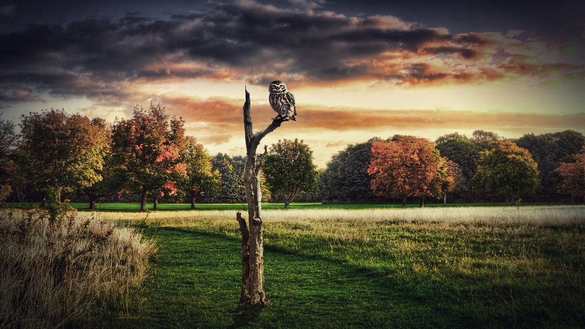 Lonely Owl Wallpaper by Martz90 1191x670
