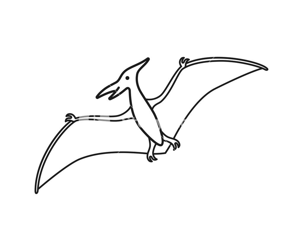 Pterodactyl vector contour silhouette Pteranodon dinosaur 1000x834