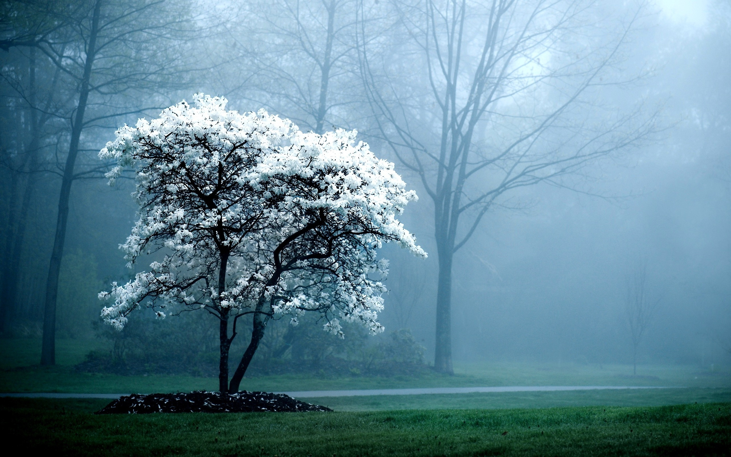 HD Peaceful Wallpapers 2560x1600