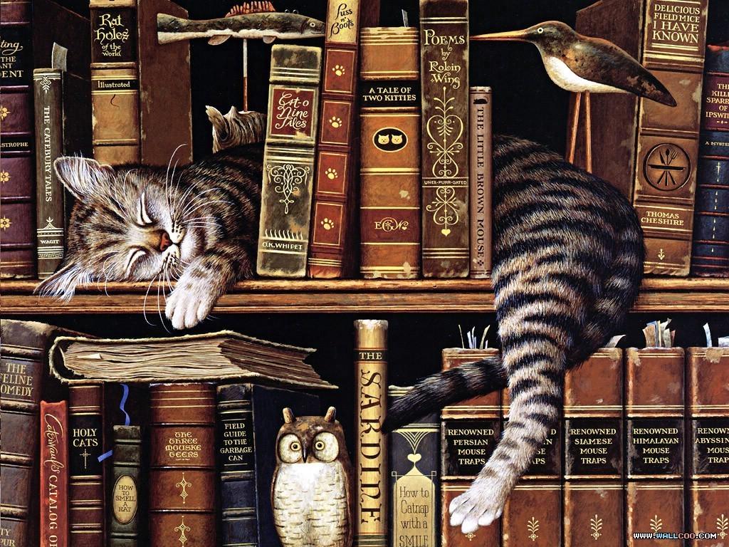 кот на полке cat on the shelf  № 1697974  скачать
