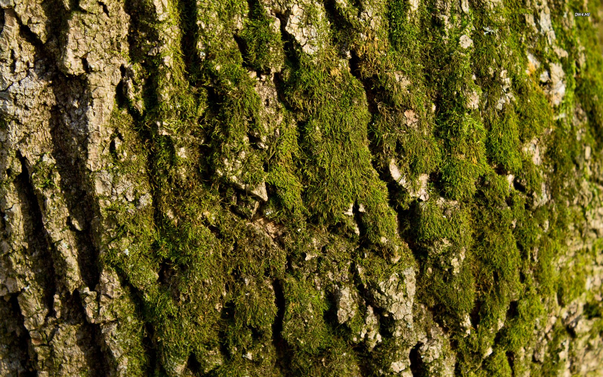 Mossy tree bark wallpaper   Nature wallpapers   958 1920x1200