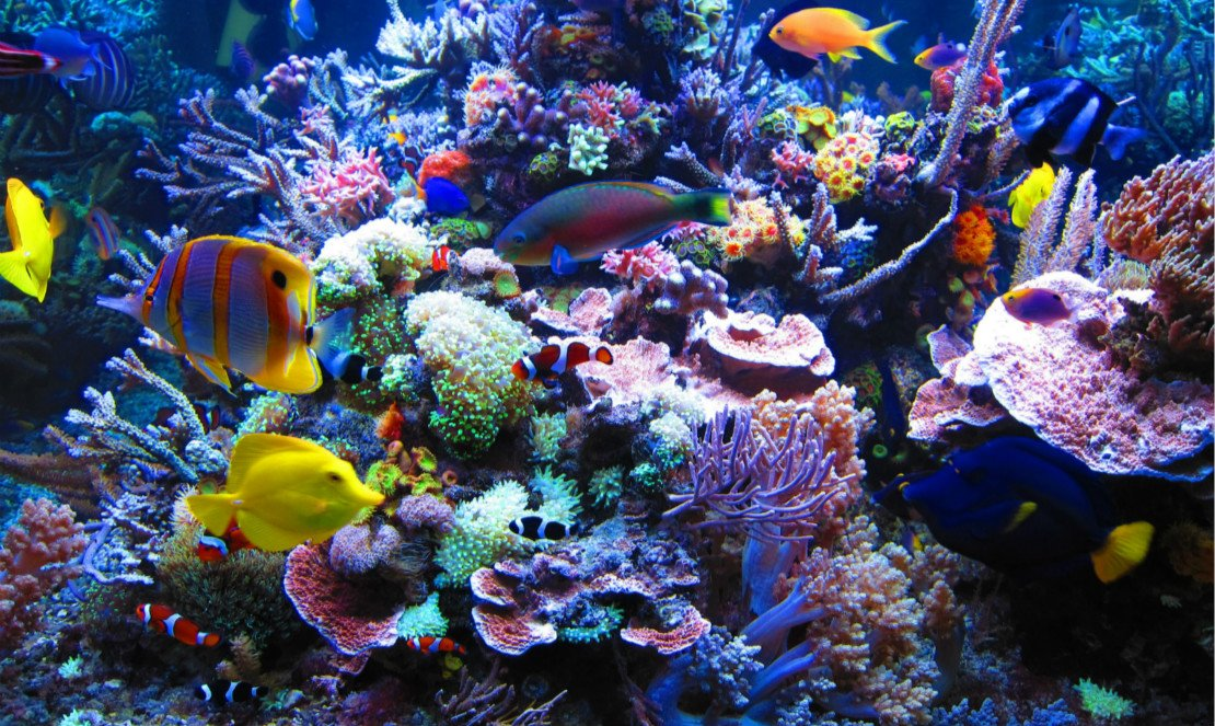 Coral Reef Wallpaper Widescreen - WallpaperSafari