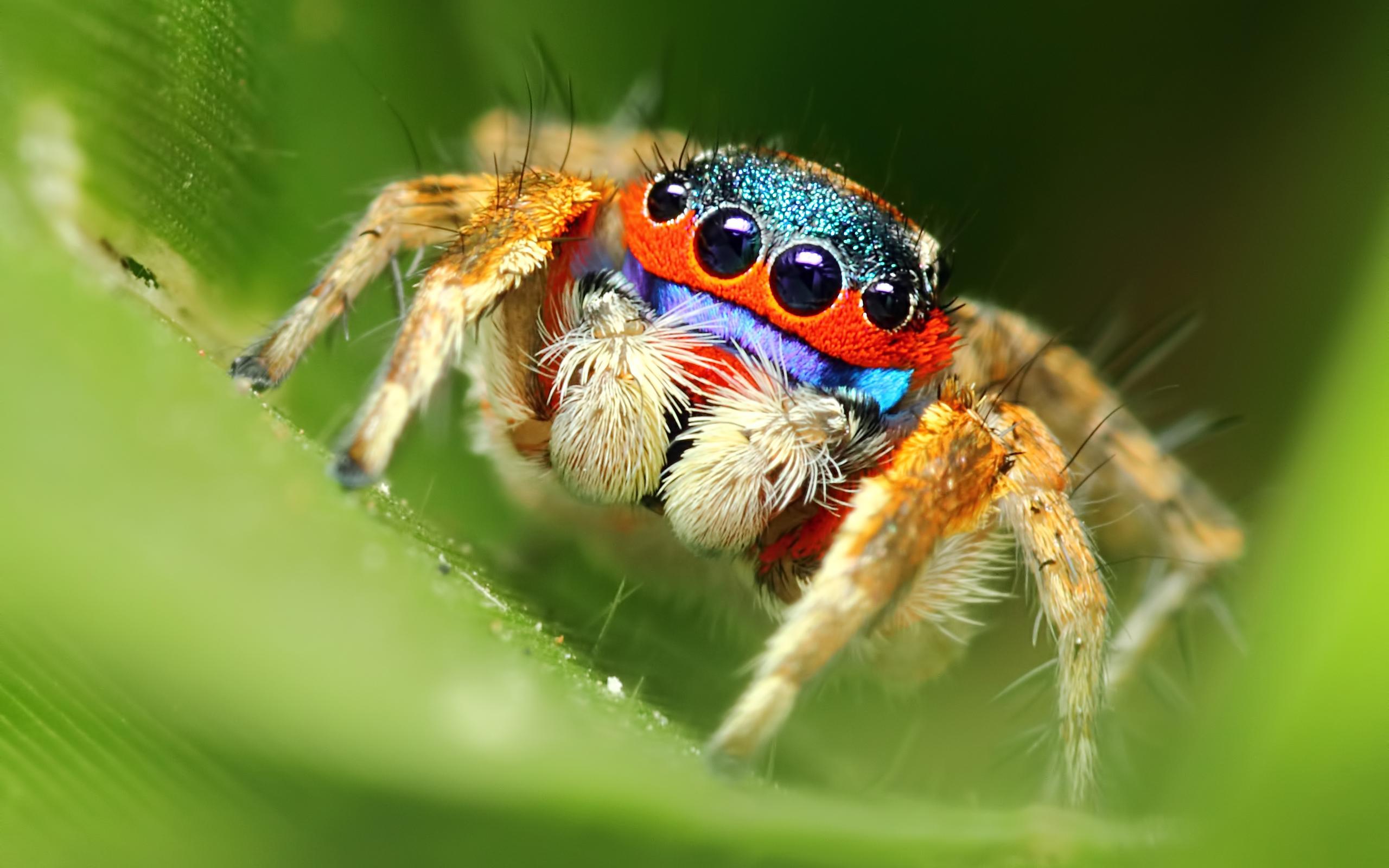 spider wallpapersafari
