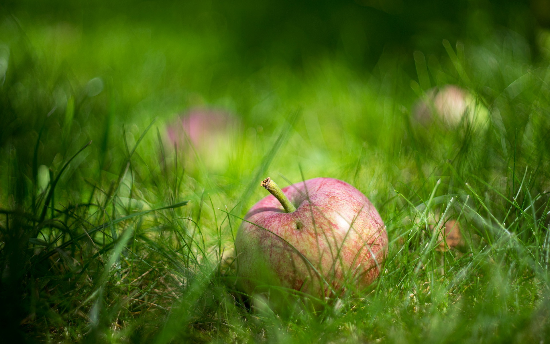 Wallpaper apple grass close up wallpapers macro   download 1920x1200
