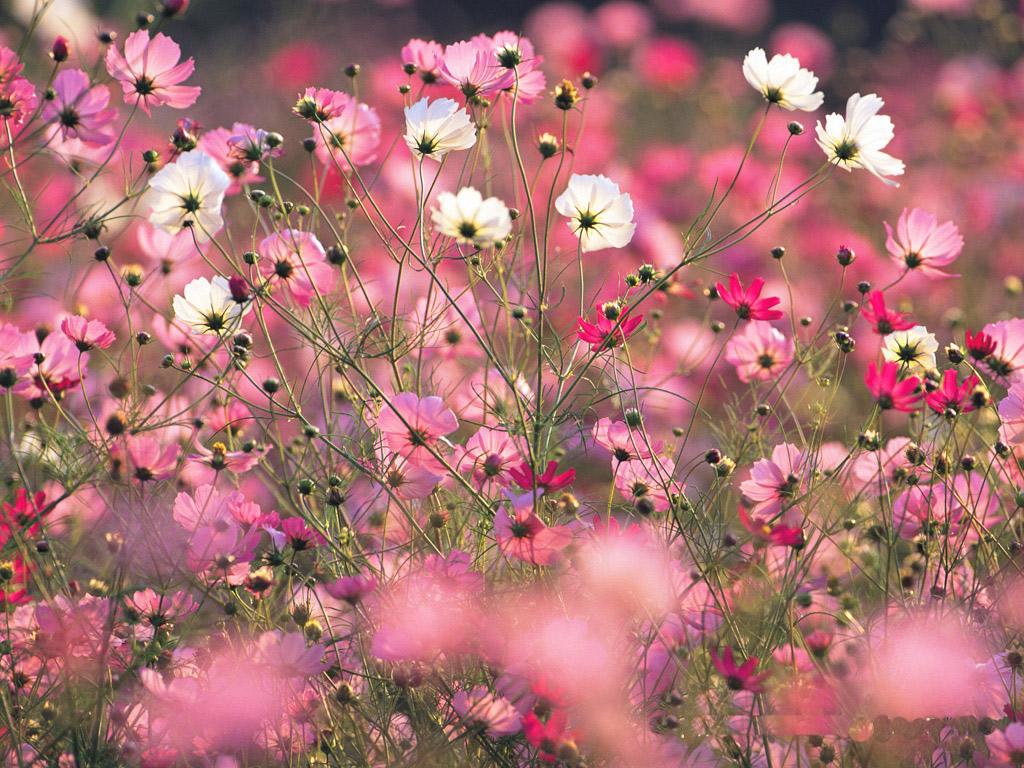 Spring Colorful Wallpapers Wallpapersafari