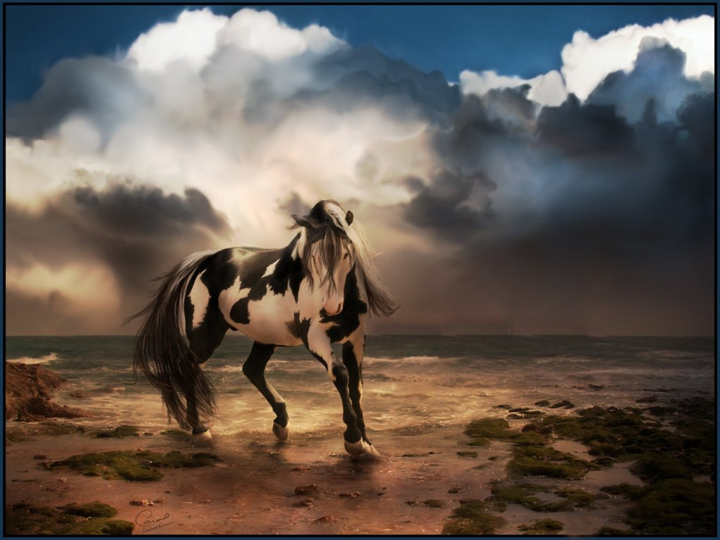 Wild Horse Desktop Background 4 7013 Animal bwalles 1024x768