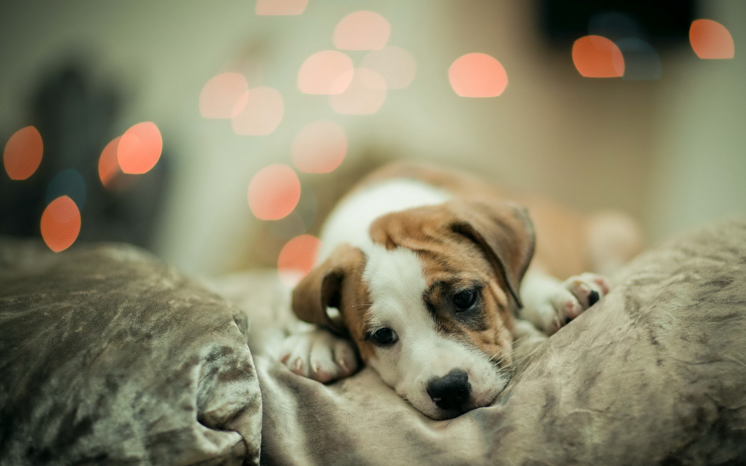 This one is like the perfect example of a cute dog wallpaper 2560x1600