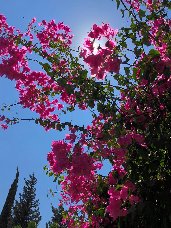 Kinneret Israel Pictures Download Images on Unsplash 1080x1440