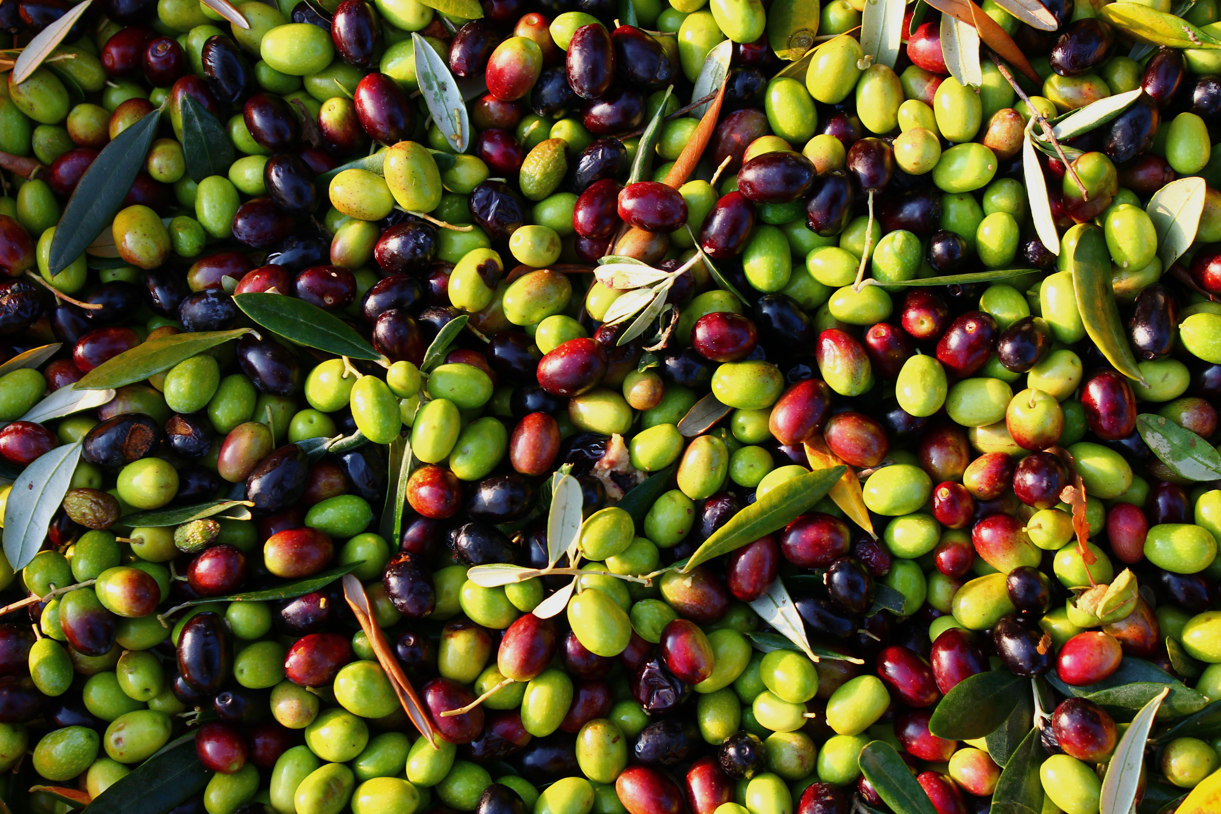 Olive Wallpaper HD Full HD Pictures 4272x2848