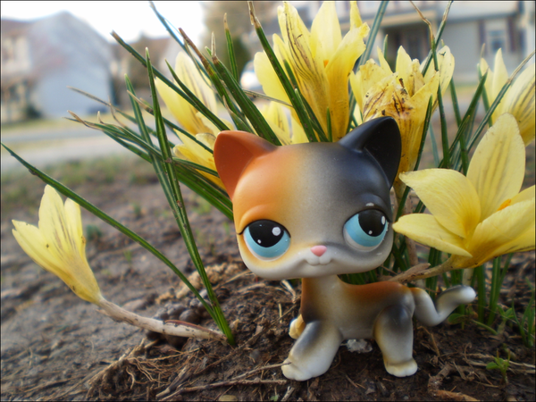 LPS Calico Flowers Wallpaper by Messybun 600x450