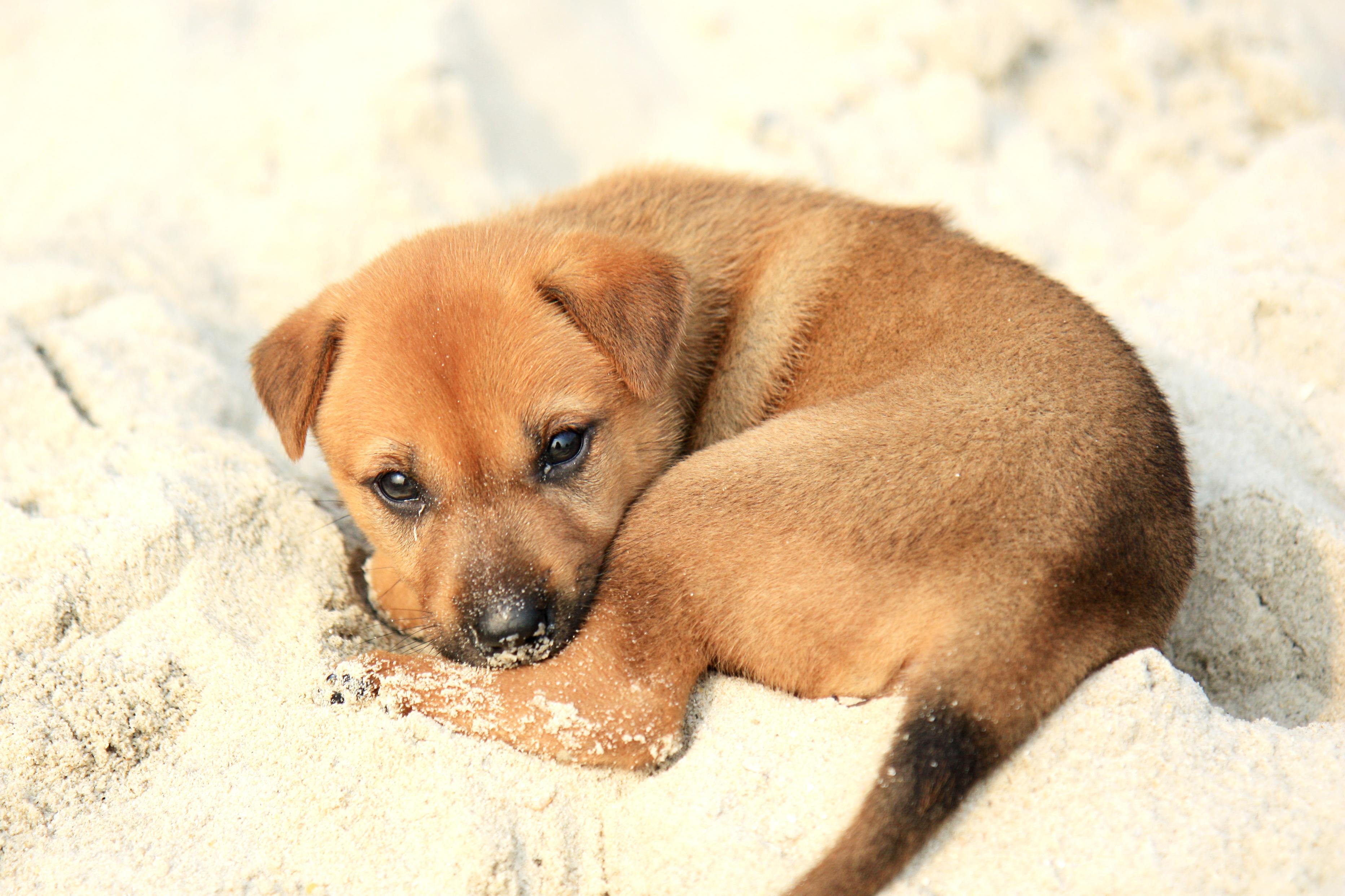 Puppies Desktop Wallpaper Wallpaper 3728x2485