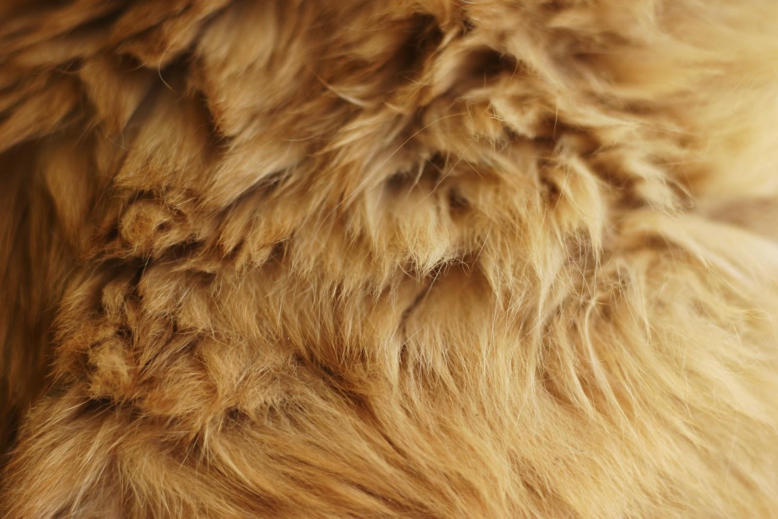 Magazines 24 Fur wallpaper fur fabric bedroom wallpaper 1600x1067