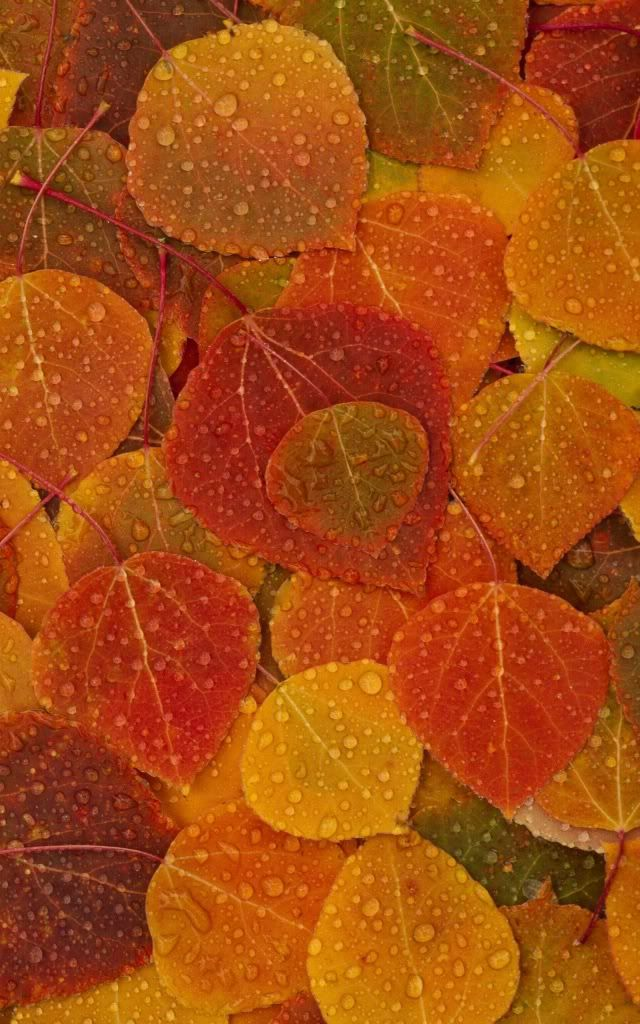 Seasons Pinterest Leaves Fall and Wallpaper Backgrounds 640x1024