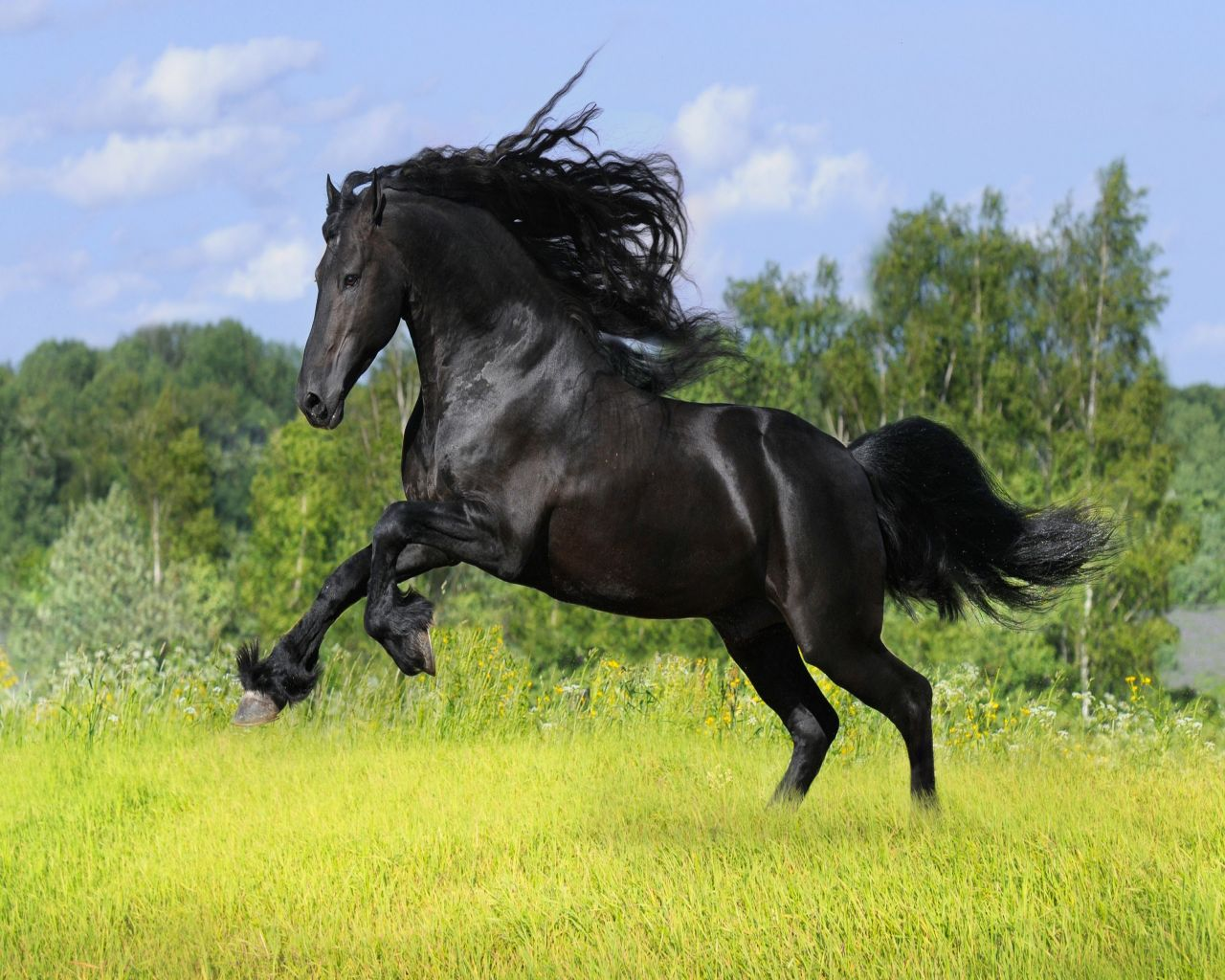 Horse Desktop Wallpaper Themes - WallpaperSafari