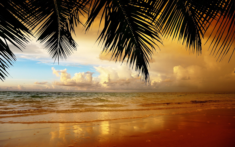 берег пальма море солнце пляж  № 3779870  скачать