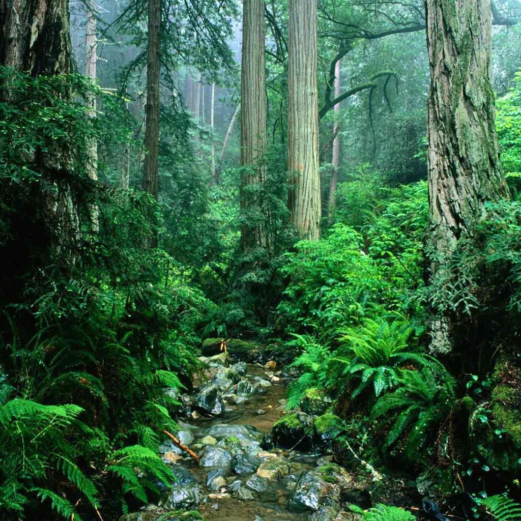 rain forest background wallpapersafari