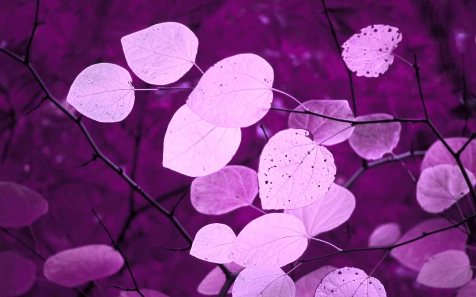 Twitter Backgrounds Purple Leaves Of Fall Twitter Layouts Purple 1600x1000