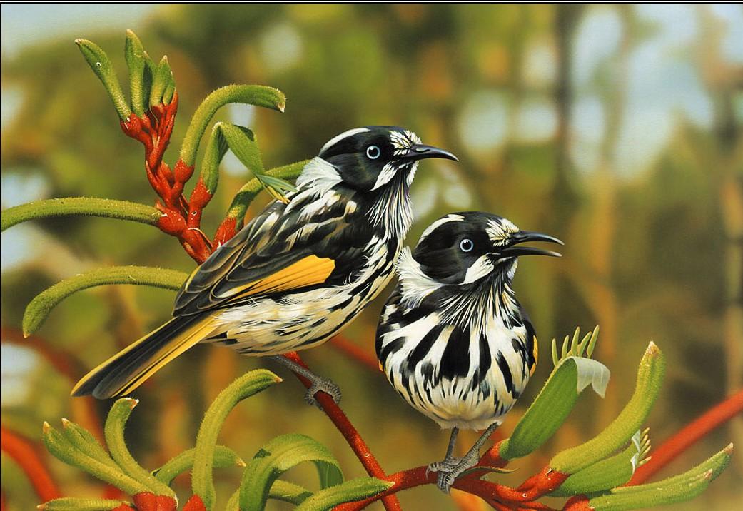 Beautiful Wallpapers Of Birds Wallpapersafari