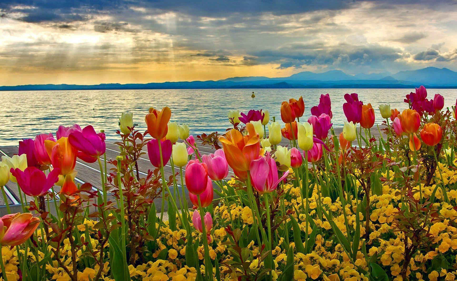 HD Spring Wallpapers For Desktop 1920x1182