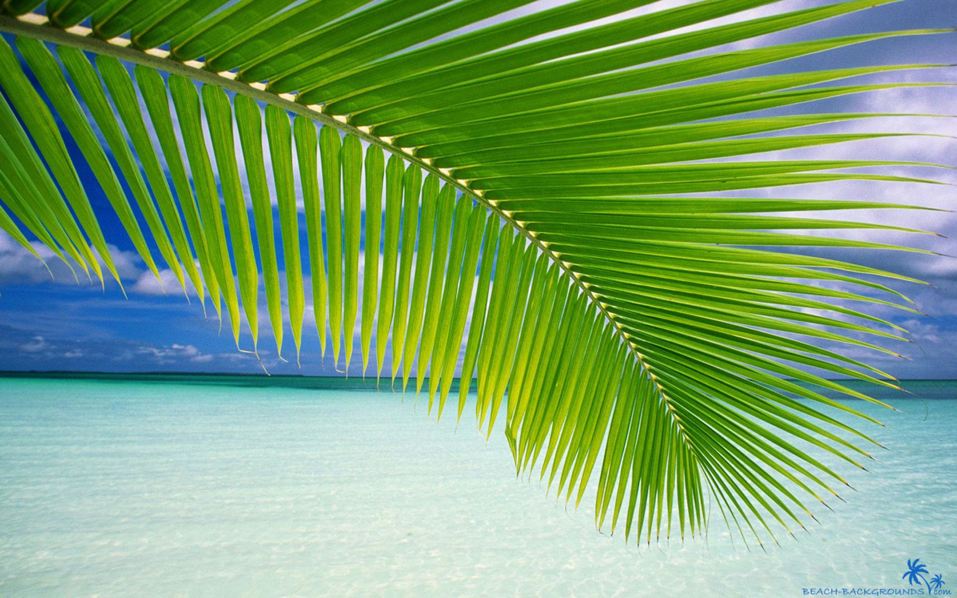 Beach palm green leaf   Beach Wallpapers 1920x1200