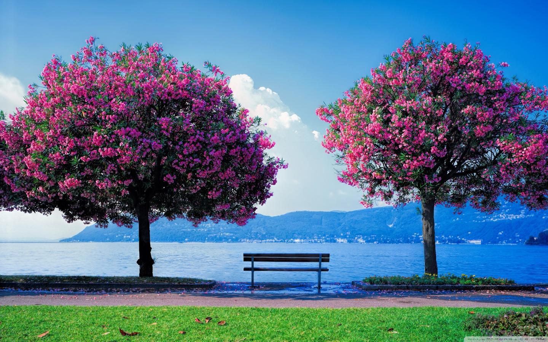 Spring Fishing 4K HD Desktop Wallpaper for Dual Monitor 1440x900