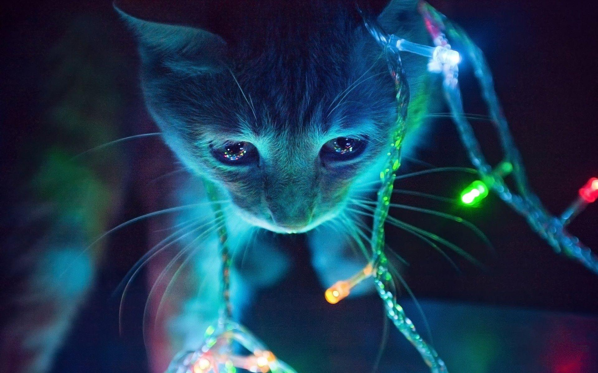 Cat In The Christmas Tree   Cats Wallpaper 41243077 1920x1200