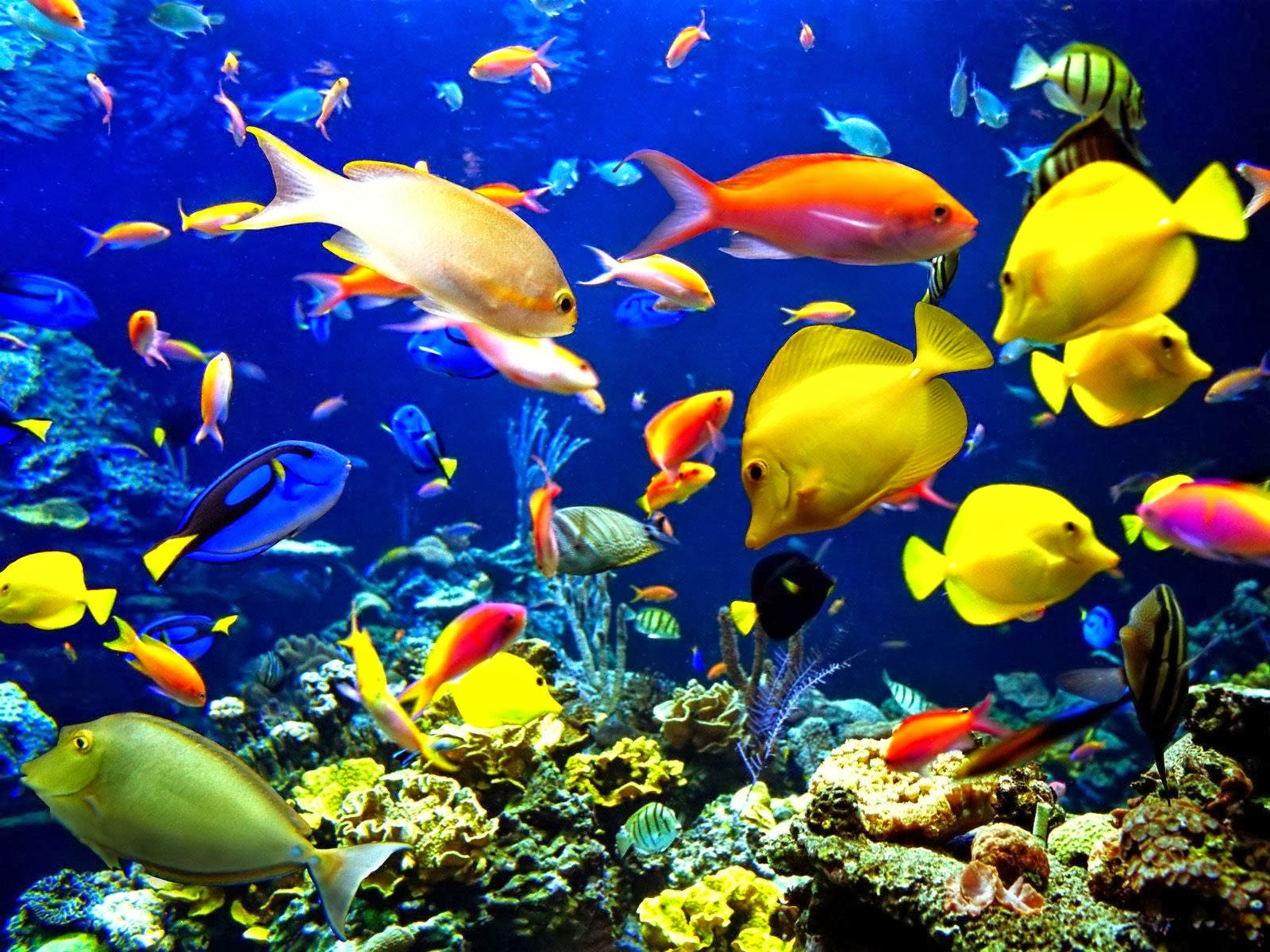 Desktop moving fish wallpaper download Download 3d HD colour design 1600x1200