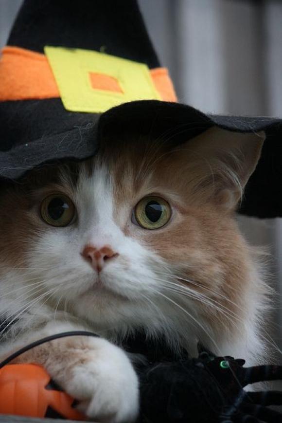 foto kucing lucu keren terbaru peramal 580x869