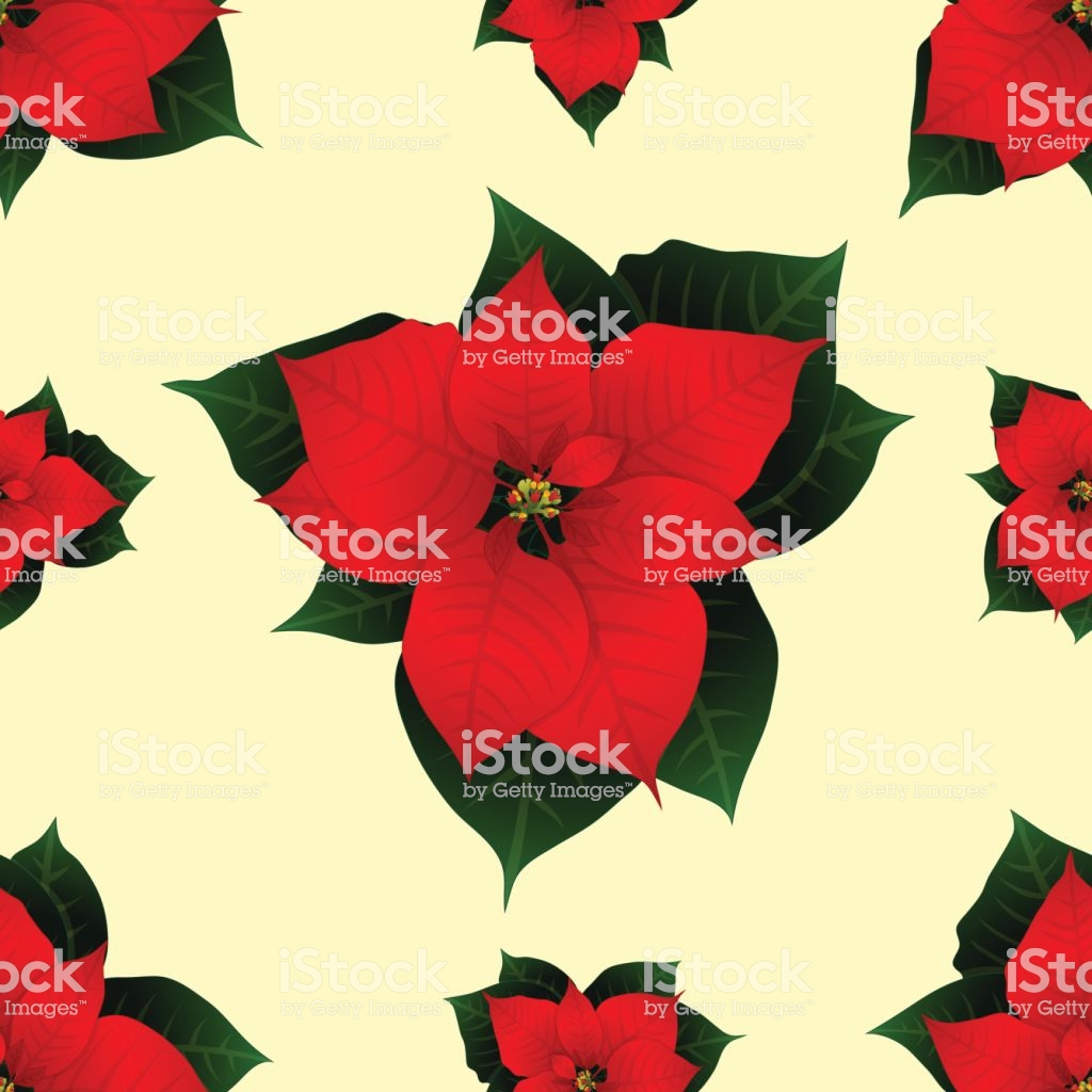 Red Poinsettia On Ivory Beige Background Vector Illustration Stock 1024x1024