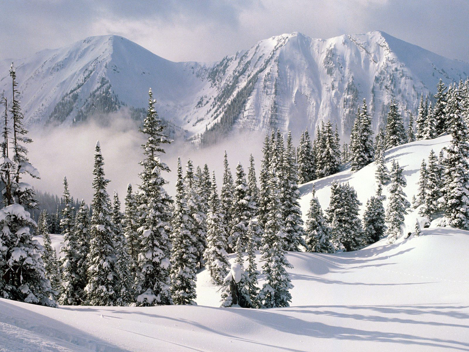 Wallpaper forest snow winter white mountains British Columbia 1600x1200