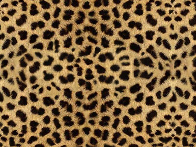 Animal Print Backgrounds 800x600