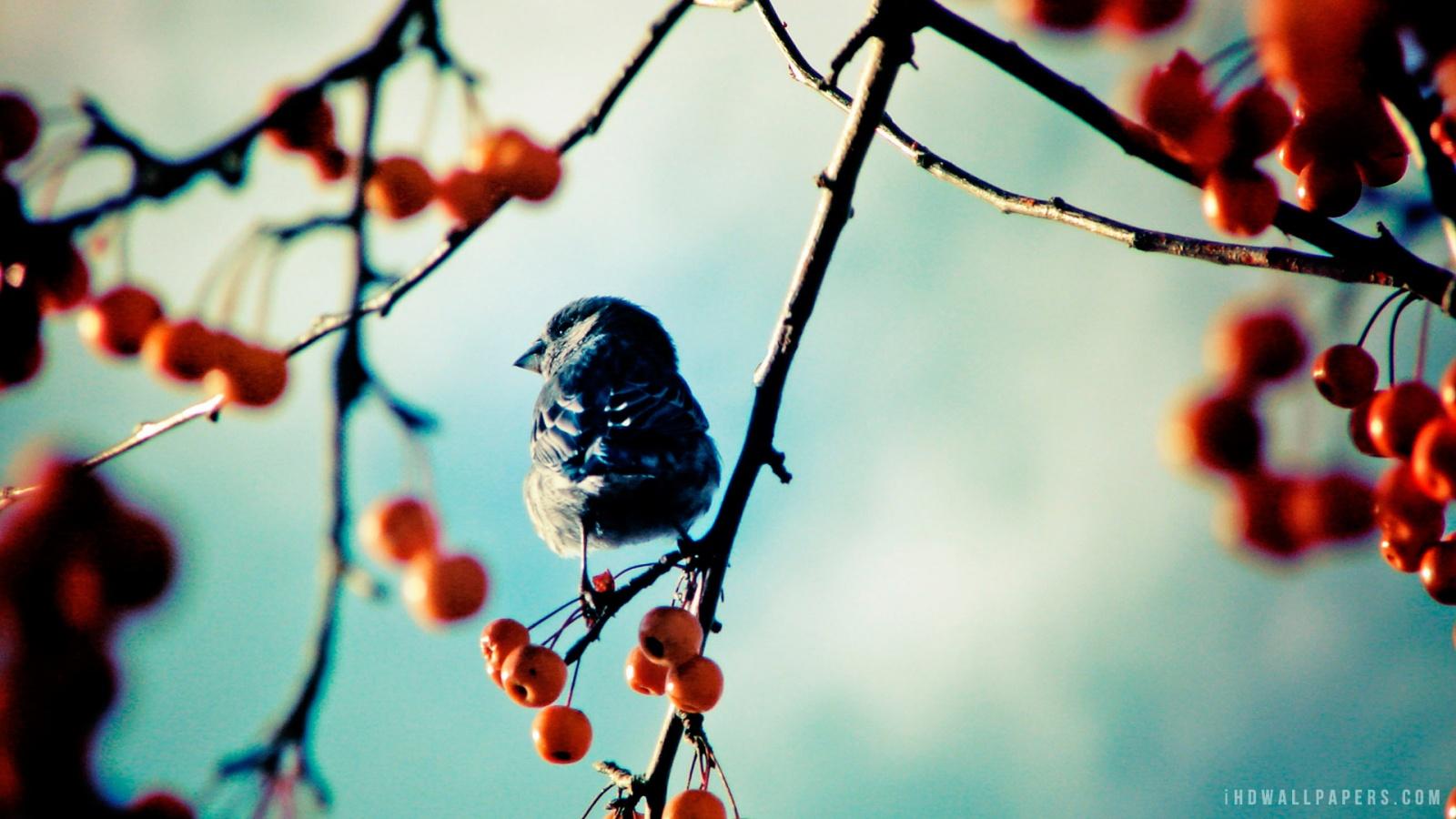 Bird on Branch HD Wallpaper   iHD Wallpapers 1600x900