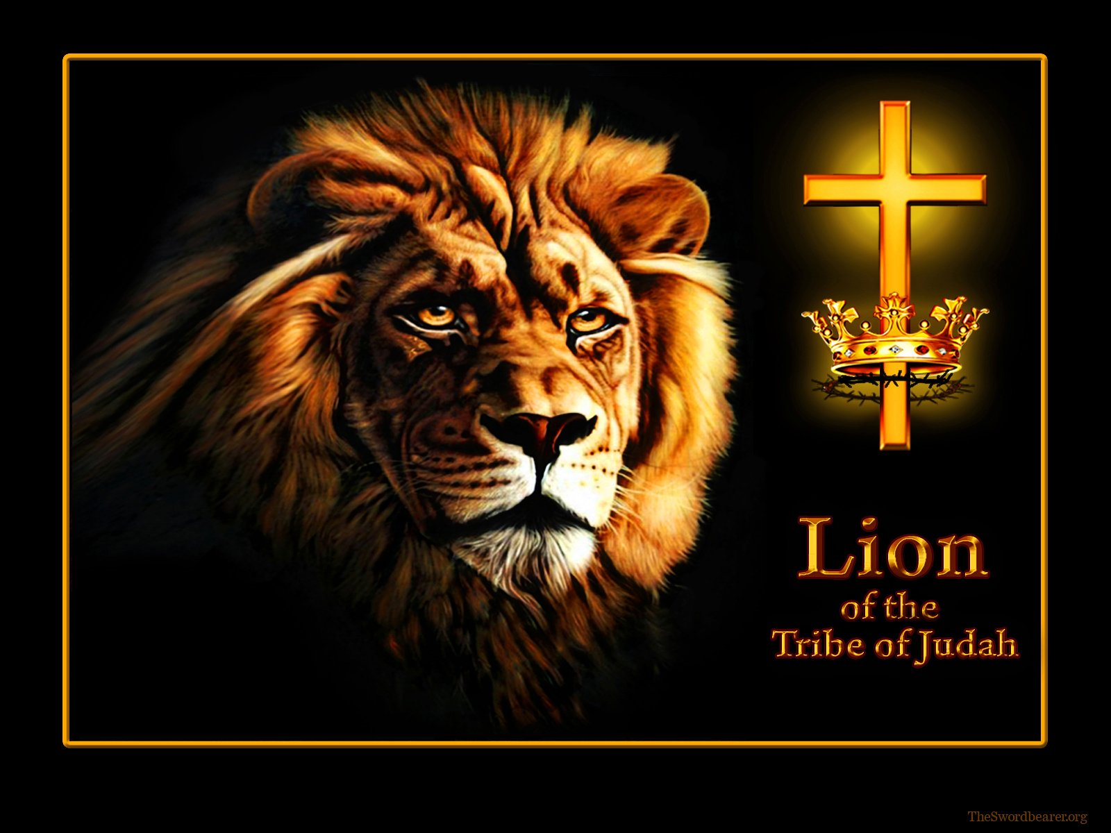 Lion Of Judah Wallpaper 1600x1200