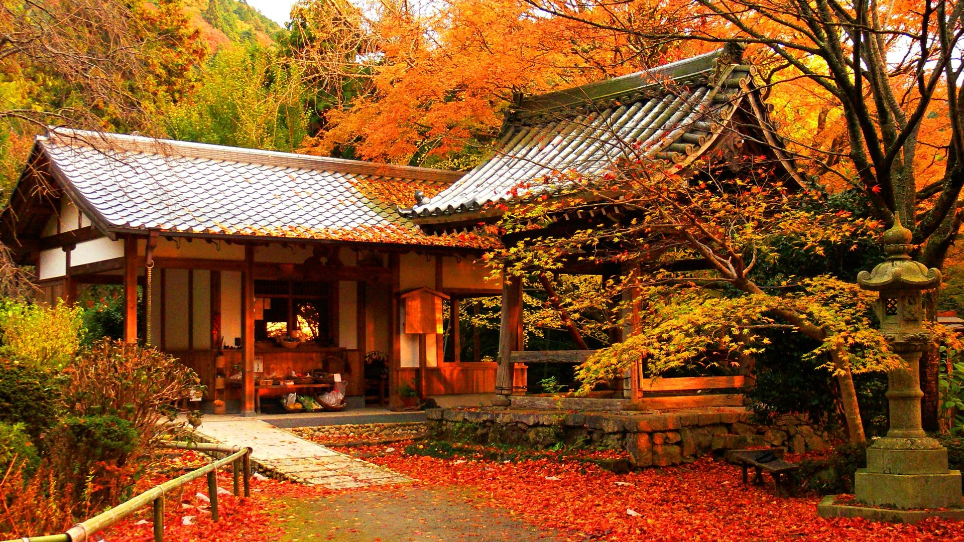 Free Download Autumn Color In Japan 18432 Wallpaper Wallpaper Hd 1920x1080 For Your Desktop Mobile Tablet Explore 37 Hd Fall Colours Wallpapers Free Fall Wallpapers For Desktop Free Fall