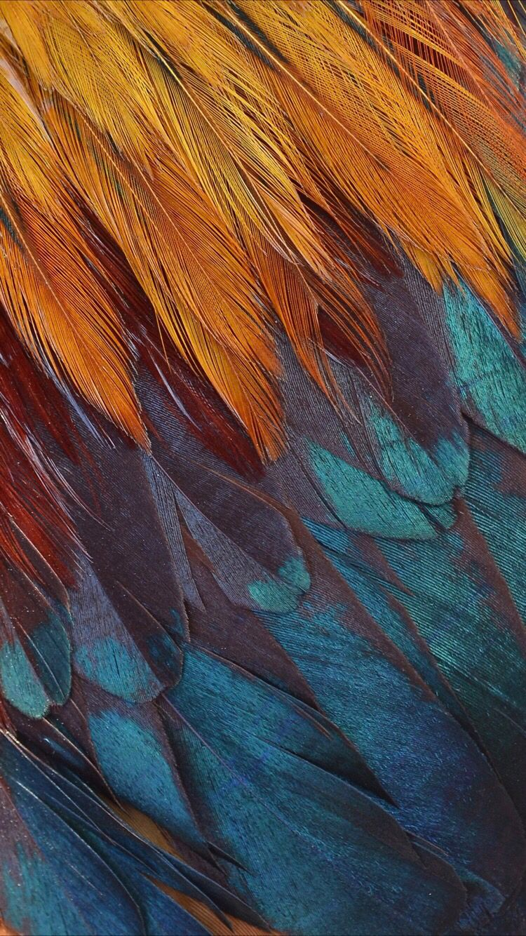 Colorful feathers wallpaper for your iPhone Xr from Everpix 750x1334