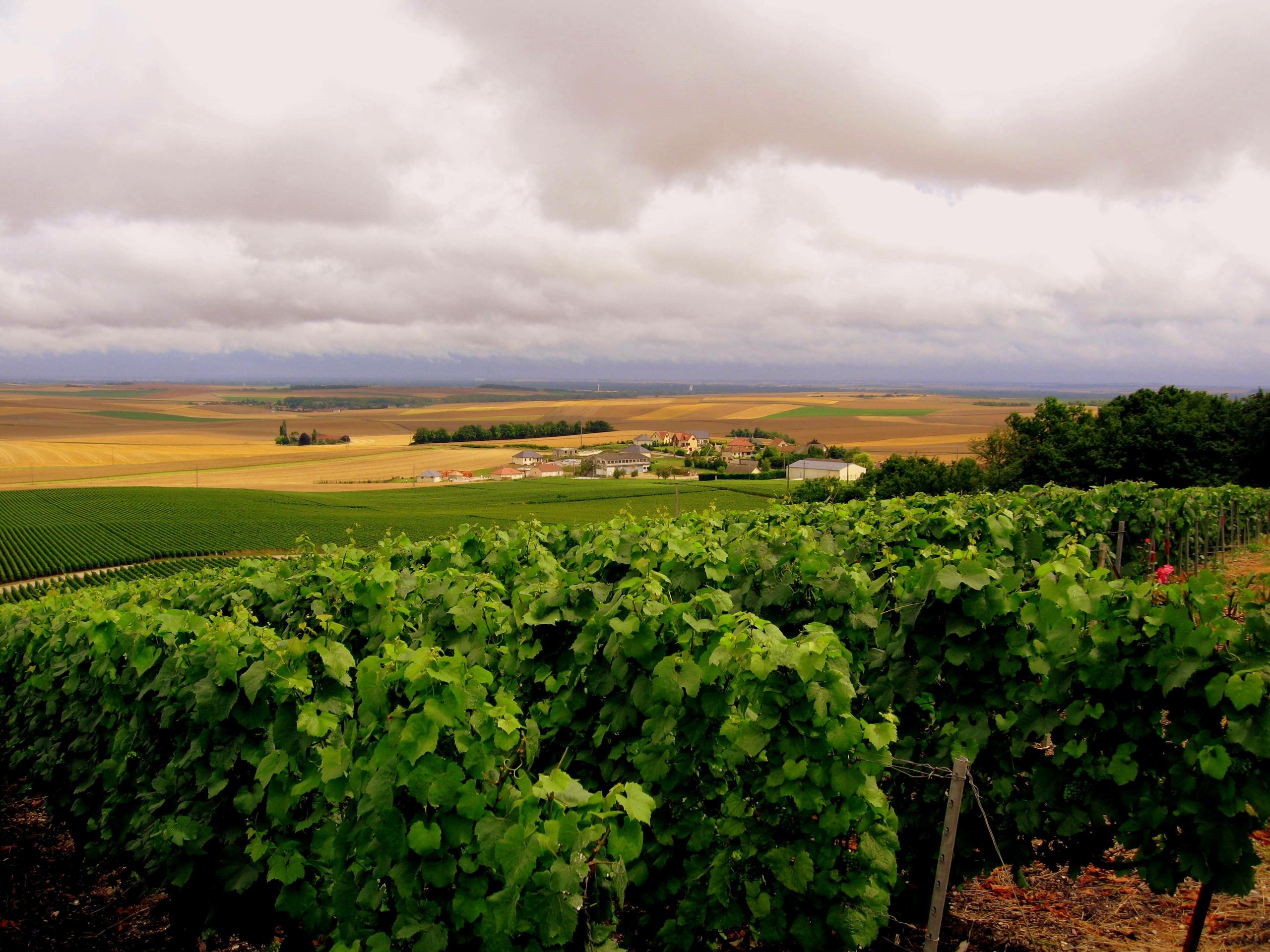Wine Country Desktop W...