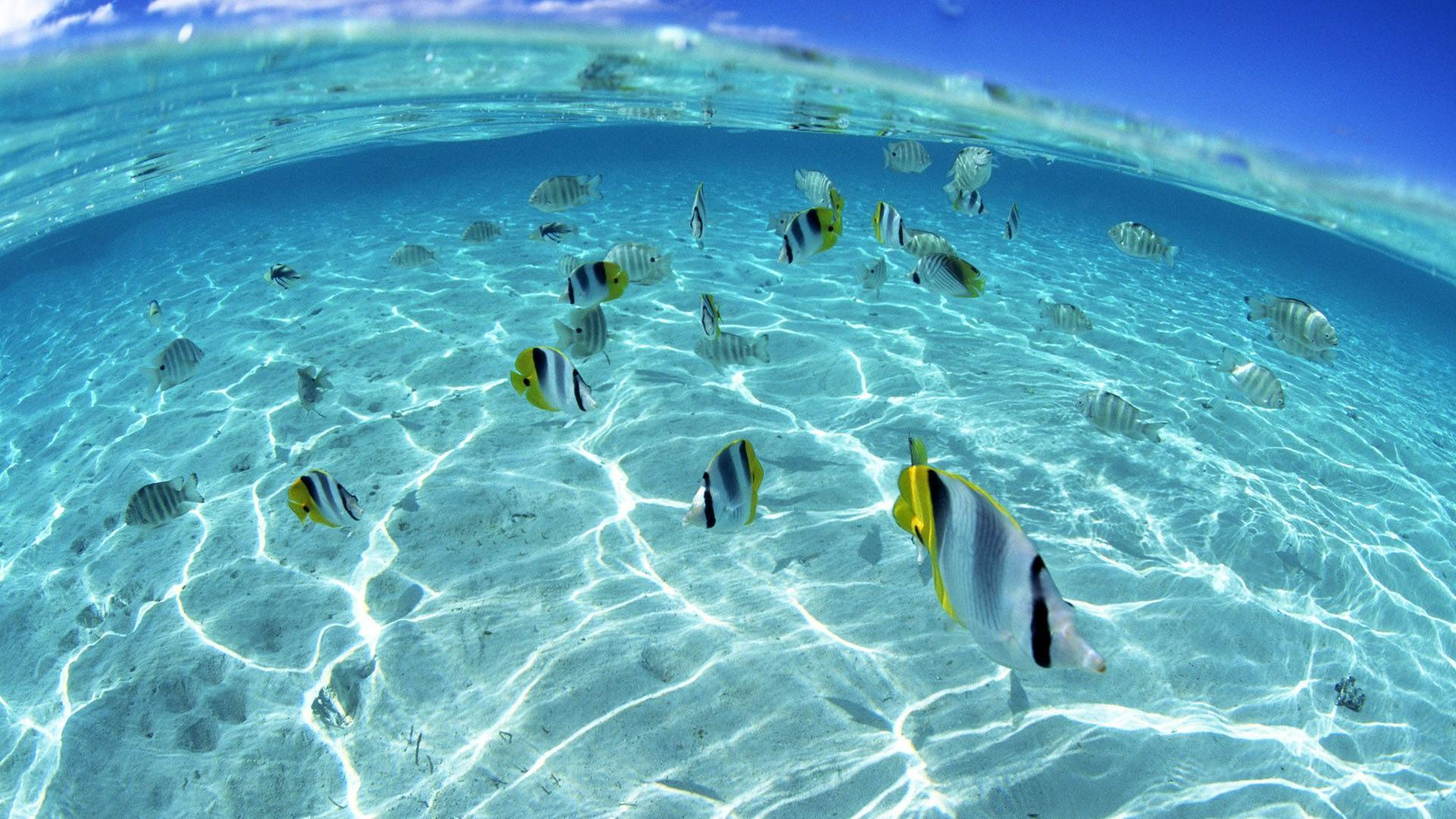 Underwater Fish Wallpaper Photos 2845 Wallpaper Cool Walldiskpaper 1920x1080