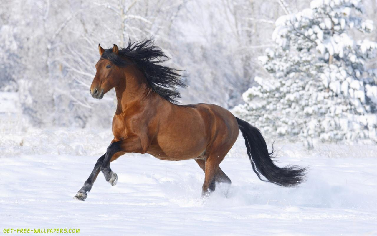 Free Download Horse Wallpaper 1280x800 For Your Desktop Mobile