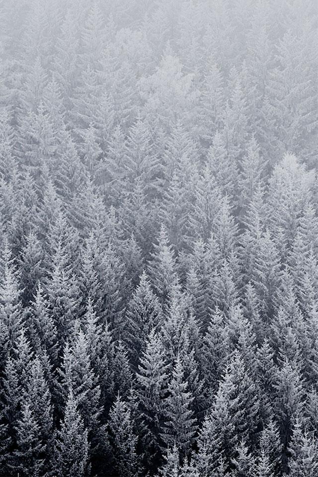 iphone winter tree wallpaper wallpapersafari